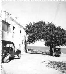 Maison de Jean et Jeanne EGRETEAUD � la Pointe des Blagueurs ---- Le vieux caroubier, pench� par le vent d'Est, n'existe plus...