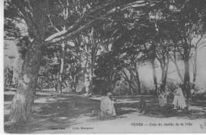 TENES le Jardin