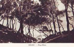 TENES - La Campagne BLANC
