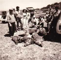 TENES en 1963 / 1964 Chasse aux Sangliers dans le BISSA  Lucien FORCADE Robert DESSOLIERS COUGOUREUX (Enseignant) Basile JONET des Militaires