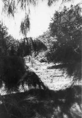 Oued-Fodda en 1954  l'orangeraie