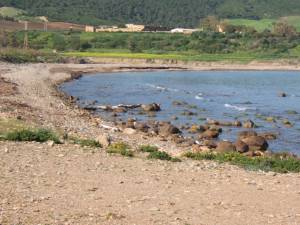 Highlight for Album: Route de MOSTAGANEM