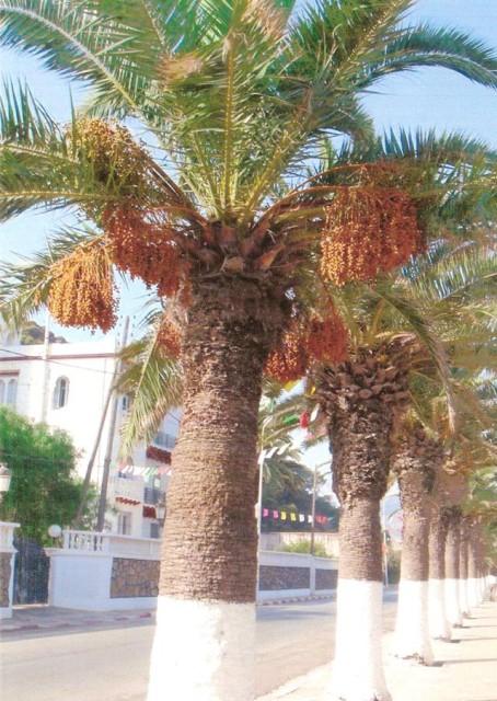 la promenade des Anglais les palmiers