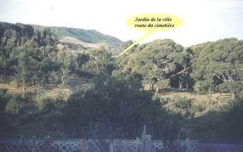 TENES en 1962/1963 ---- Jardin du Beylik  avec ses ruines romaines ses grands arbres ses cyclamens