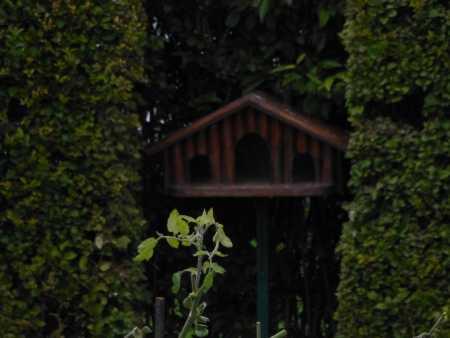 la cage aux oiseaux Tous les jours une centaine d'oiseaux viennent picorer