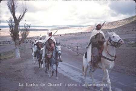 Harka de Charef
