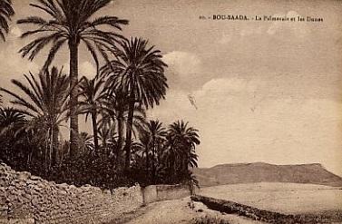 BOU-SAADA - La Palmeraie