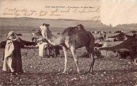 COLOMB-BECHAR un campement de nomades