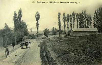 DJELFA - Ferme du Bachaga