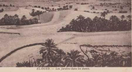 EL OUED - Le Jardin dans les dunes