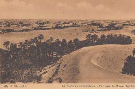 EL OUED - La Palmeraie de Sidi-Salem
