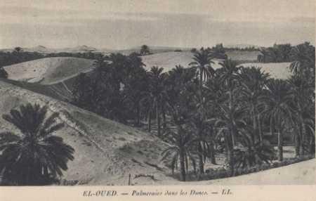EL OUED - La Palmeraie dans les dunes