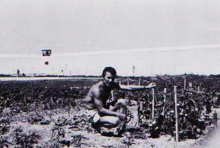 Jacques DELBOUYS et ses tomates
