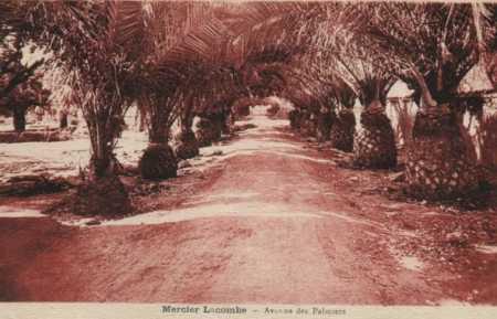 MERCIER-LACOMBE - Avenue des Palmiers