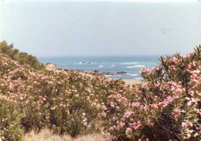 Les lauriers-roses devant Mama Binette vers la mer ---- Photo de Jean-Claude RODRIGUEZ prise en Juillet 1979