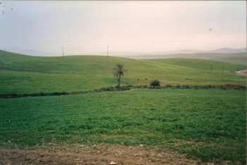 Le Palmier de Cavaignac