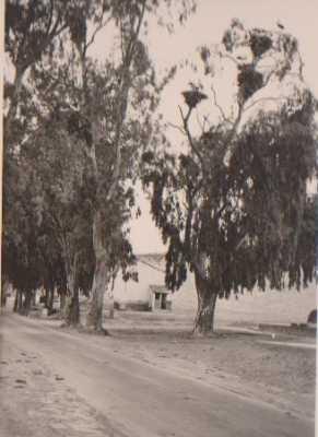 CHASSERIAU Une partie de l'ancienne Ecole et les cigognes dans les arbres