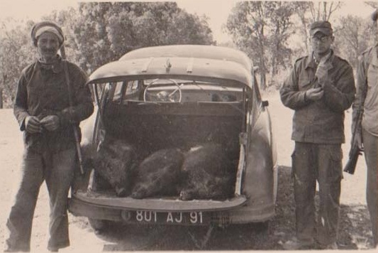Retour de Chasse aux sangliers ---- HAMOU avec les lunettes : Sandro DUVAL et 4 sangliers abattus au fond de la Ford Vedette de Paul CARTEAUX