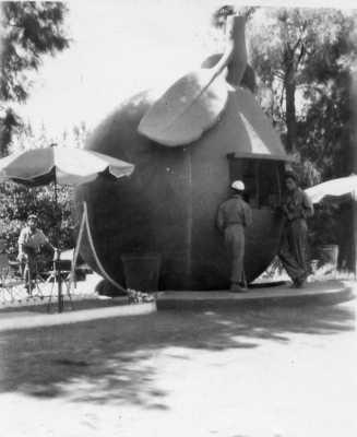 L'orange en 1954