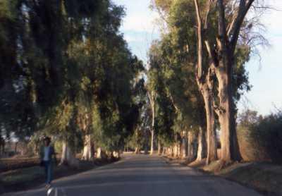 LAMARTINE Route d'Oued Fodda