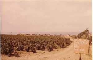 Photo prise depuis la route  de Mostaganem vers 1965-67 au fond : les restes du regroupement