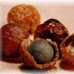 les Boules de Sapindus ---- Explications sur    le site de BOUGIE (cliquez ici)