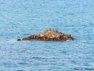 Le rocher de Reiche en face des abattoirs