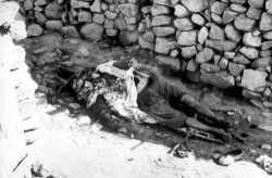 1957 - MNA contre FLN le massacre de Choukehetta