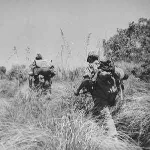 Progression dans de hautes herbes en juin 1959